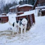Run run! Bark bark! Happy doggo!