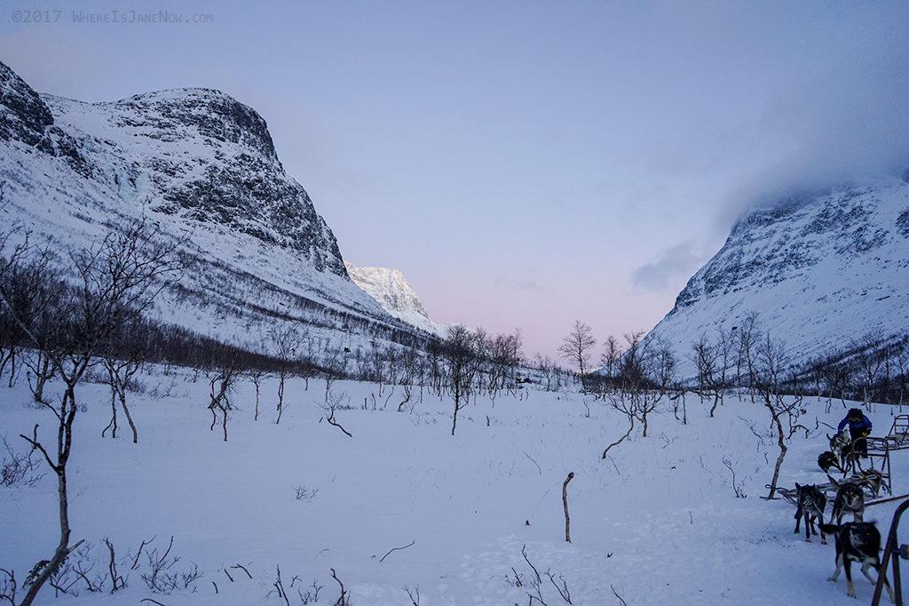 Norway Dog Sledding 1